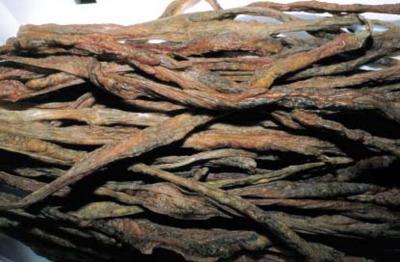 Budelluzzo-di-grosseto