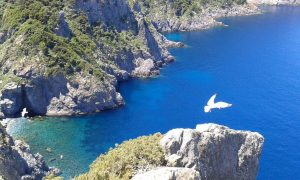 isola di gorgona spiagge