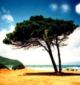 spiaggia golfo di baratti