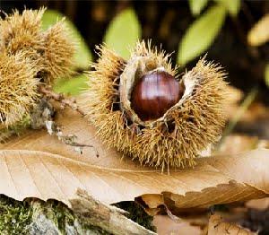 Sagra-del-marrone-e-dei-frutti-del-sottobosco