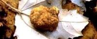 Sagra-del-tartufo-bianco-e-del-fungo-01-2010