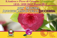 Antiche Camelie Della Lucchesia. 22esima Mostra In Arrivo A Marzo 2011. Capannori