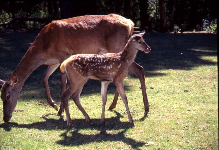 Parco Zoo Di Poppi In Provincia Di Arezzo.