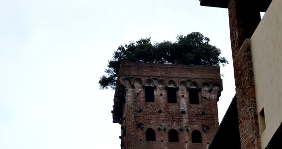 Torre Guinigi. La Torre Alberata Di Lucca.