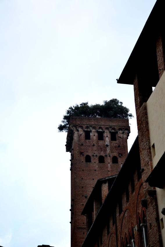 Lucca Torreguinigi