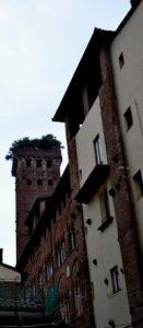 vicolo e torre guinigi