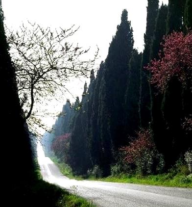 sentiero bolgheri