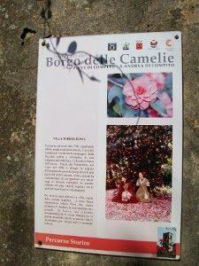 mostra_antiche_camelie_2