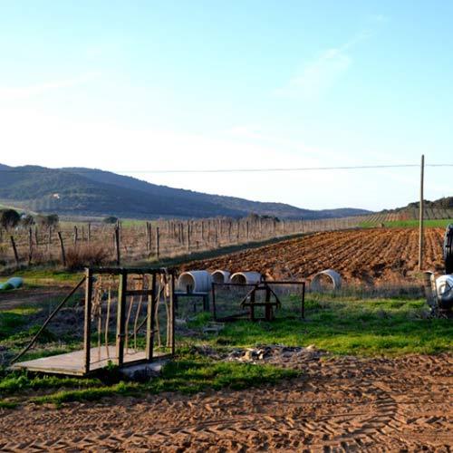 2016-02-25-Vivere-la-Toscana-Bartoli-podere_