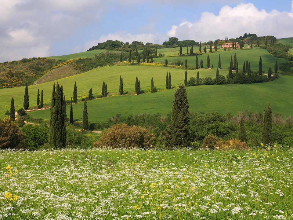 Campagna Toscana Fiorita