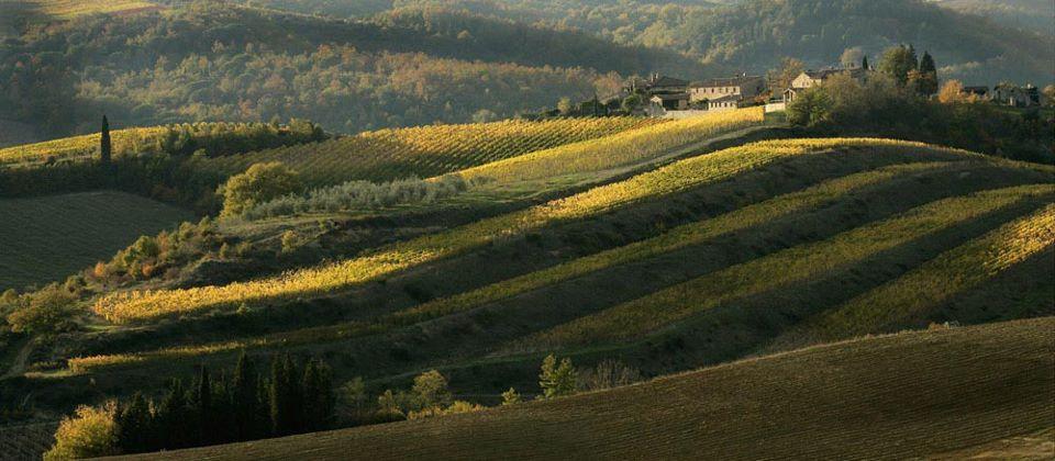 Colline Toscane Cipressi