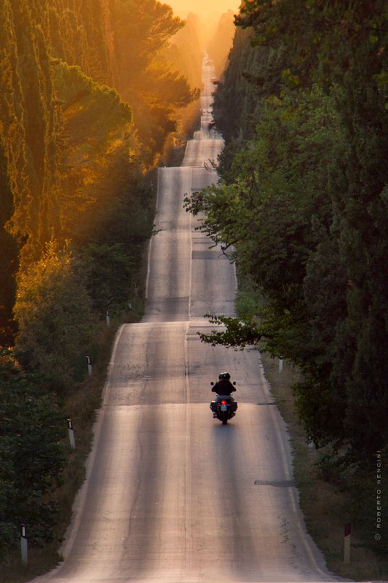Viale Dei Cipressi Di Roberto Nencini