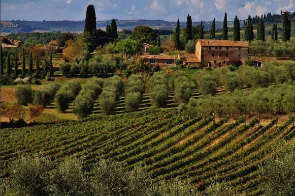 Rilassati In Mezzo Al Verde Di Castelnuovo Berardenga