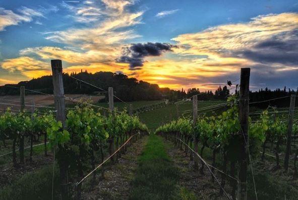 I vitigni di Tavarnelle Val di Pesa